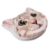 Curious Cat Badmadrass Multi